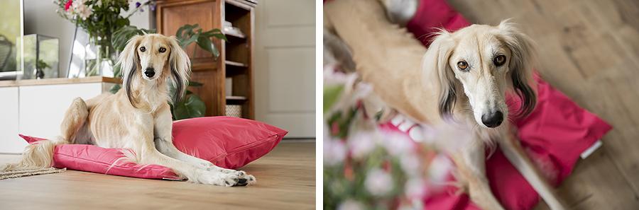 give away pet studio win actie belle fae bedrijven promotie winnen gratis halsband riem voer snack hond honden hondenblog handgemaakt halsbanden mand kussen beeztees