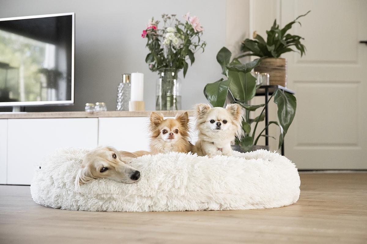 meerdere honden lastig roedel klein groot chihuahua saluki kleine hondjes grote honden