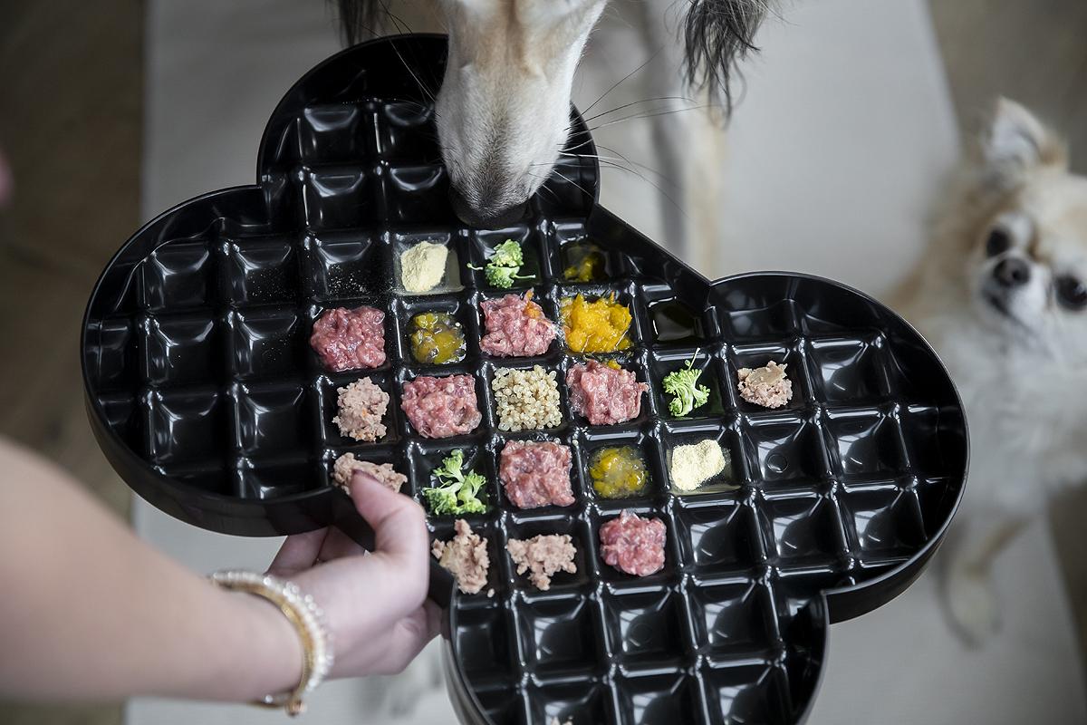 slowfeeder slow dog slowdog slodog slow feeder plate anti schrok bak antischrok anti-schrok review ervaring voordelen nadelen voordeel nadeel vers vlees brokken hond honden schrokken