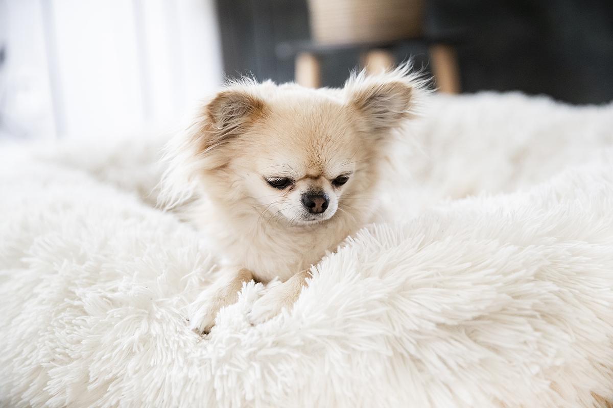 fluffy donut hondenmand hondenmanden mooiste alle leukste betaalbare luxe hondenmanden