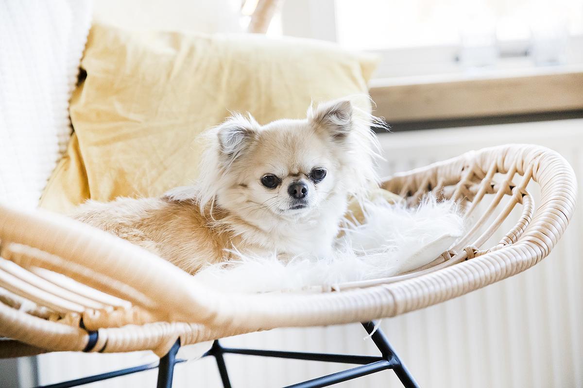 de leukste hondenaccounts op instagram insta honden accounts hondeninstagram nederland nederlandse hondenblog blogger honden blog