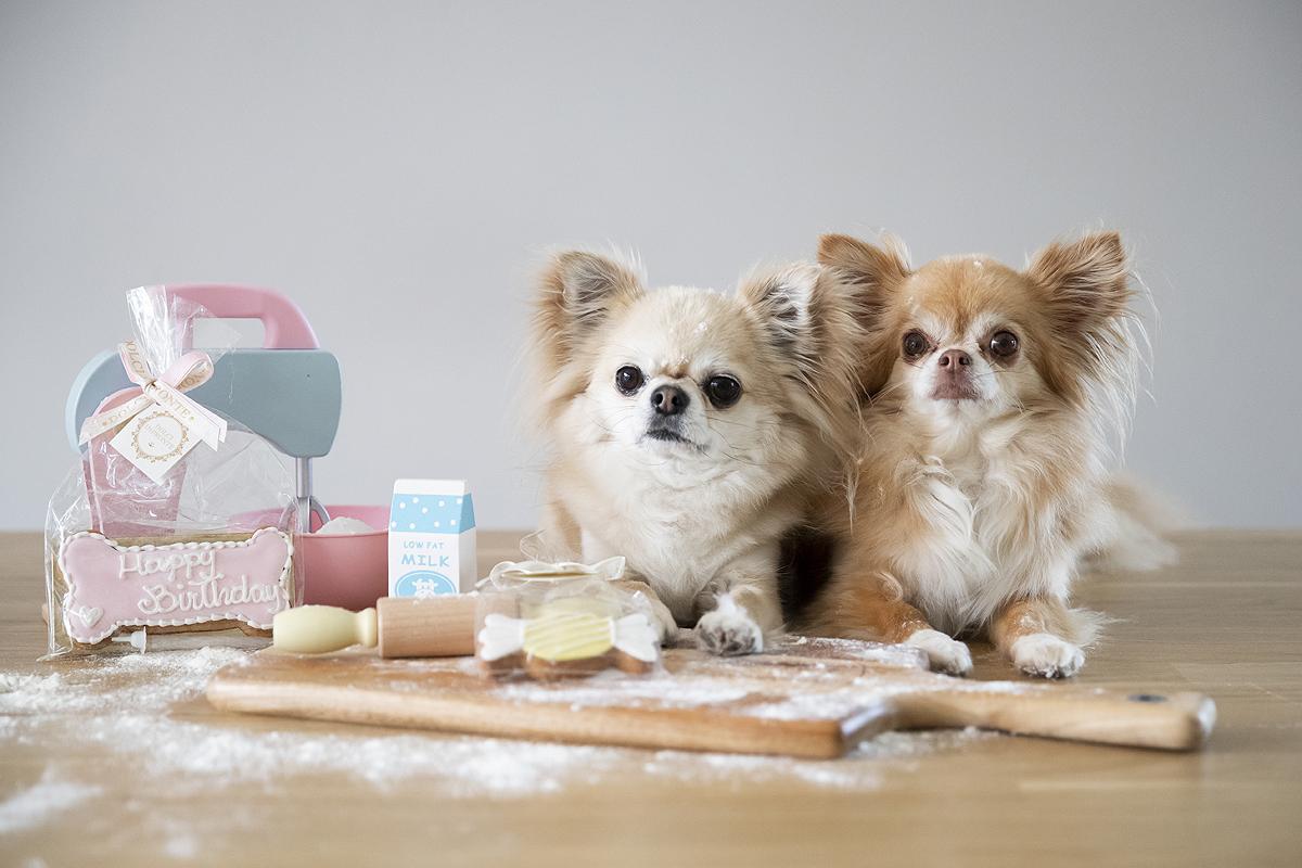 hondentaart taart hond taarten cupcakes recept hoe verjaardag verjaardagstaart hondenblog
