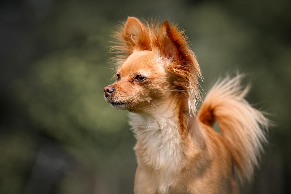 mooiste inspirerende instagram hondenaccounts honden accounts hondeninstagram volgen