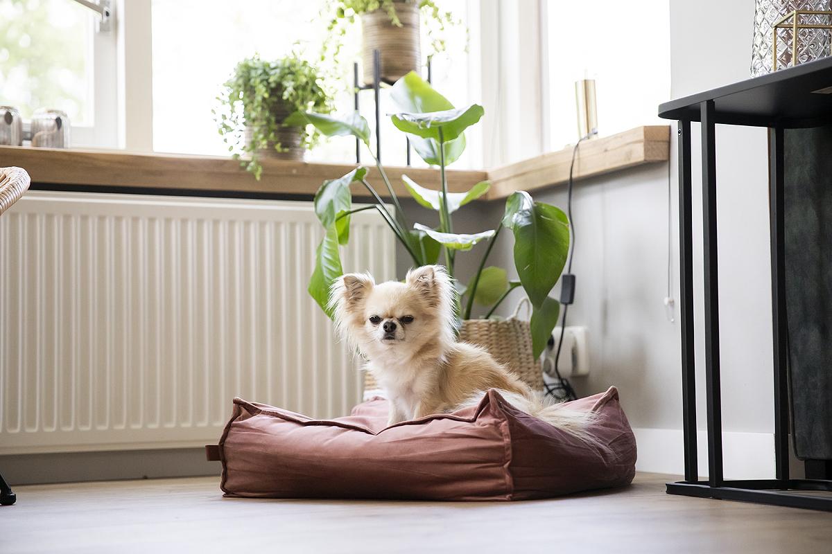 velvet velours fluweel hondenmand hondenkussen hondenmanden