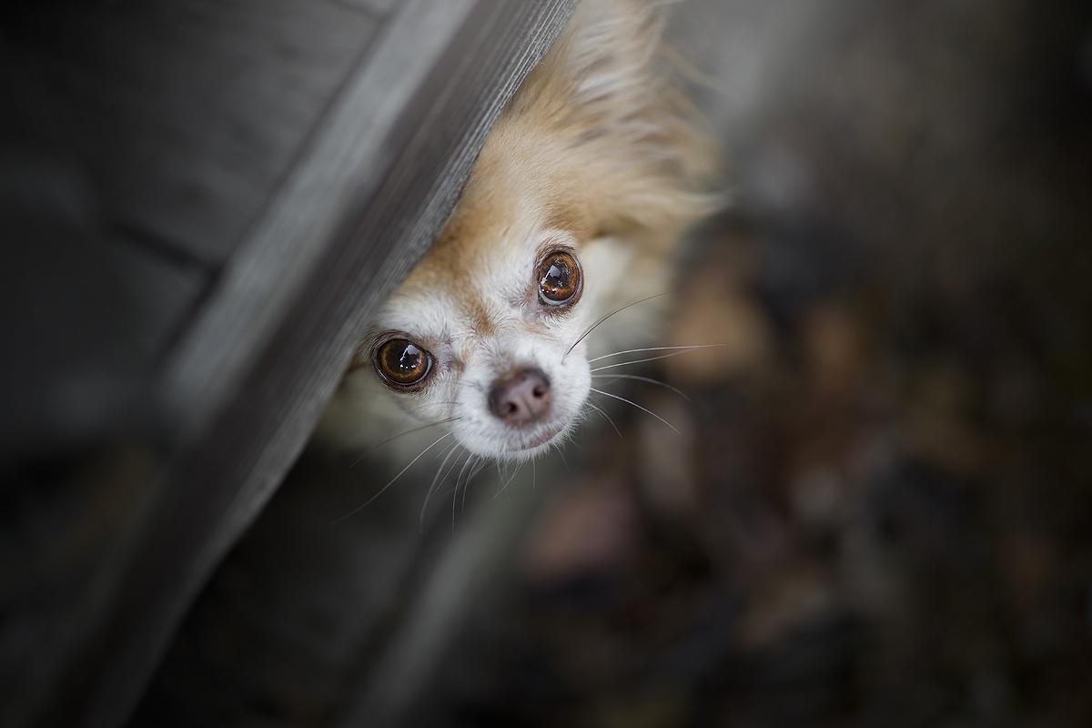 hondenblog hondenblogger honden blog hondenfotograaf hondenfotografie hondenfotoshoot online cursus foto's hond
