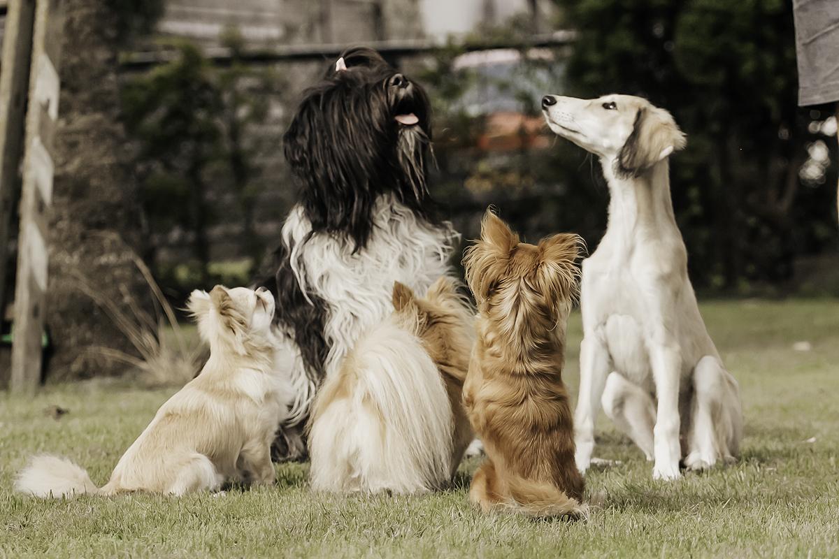 vijf honden kinderen regels ritme routine hondenblog kinderen samen hond kind baby oude hond